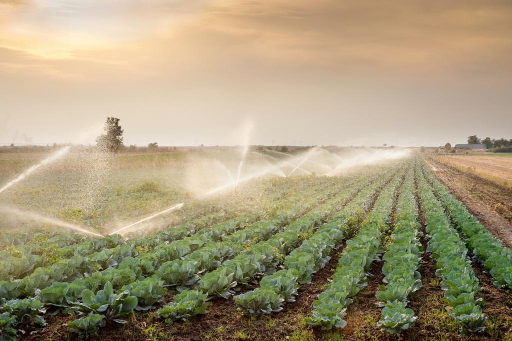 Полив сельскохозяйственных полей